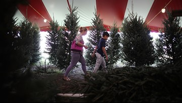 Why you should avoid buying a Christmas tree on Black Friday or Cyber Monday