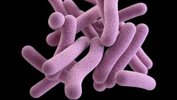 Vaccine shows promise for preventing active tuberculosis disease