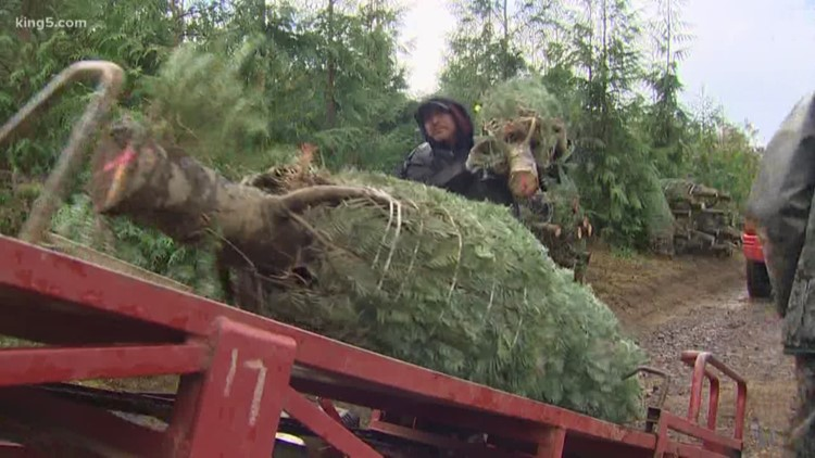 You can now get a permit online to cut down a Christmas tree in some Washington National Forests