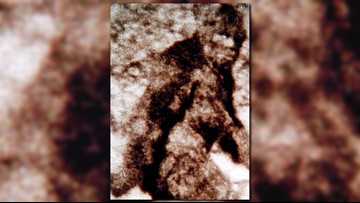 FBI releases 'Bigfoot' files from 1970s, decades after 'credible' Northwest sighting