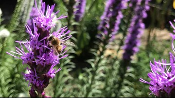 Post Falls man creates 'haven' to conserve bees