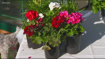 You Can Grow It: The best time to plant flowers and vegetables