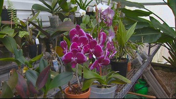 You Can Grow It: Growing beautiful orchids