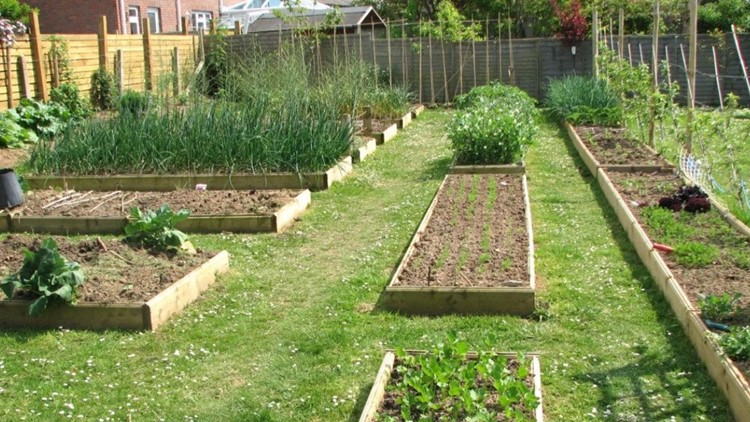 You Can Grow It: Some great garden planning tips