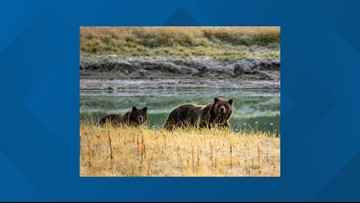 Killing of orphaned Idaho black bear cub raises questions