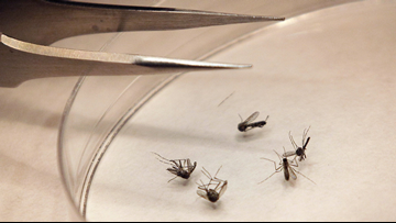 Garden City mosquitoes test positive for West Nile