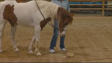 Where's Larry? Idaho Horse Park