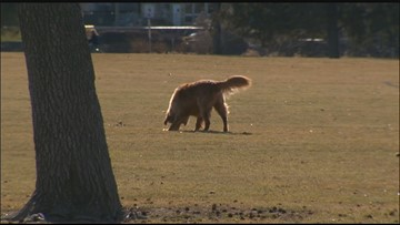 Meridian increases off-leash dog fines by up to 400%