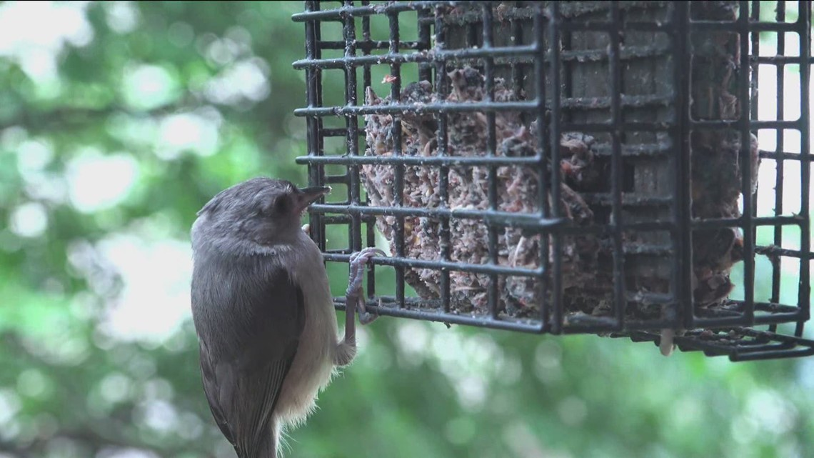 Fish and Game urges removal of backyard bird feeders