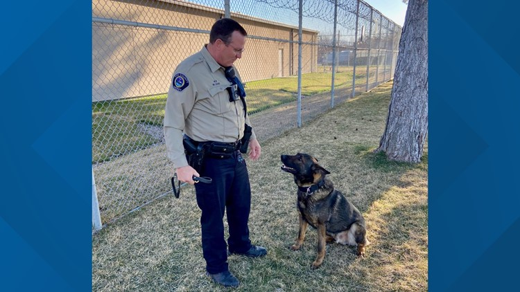 Ada County Sheriff K-9 forced into early retirement after cancer diagnosis