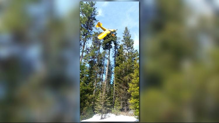 Plane in tree near McCall
