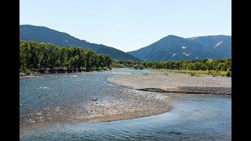Yellowstone Park river to close area for exotic fish removal