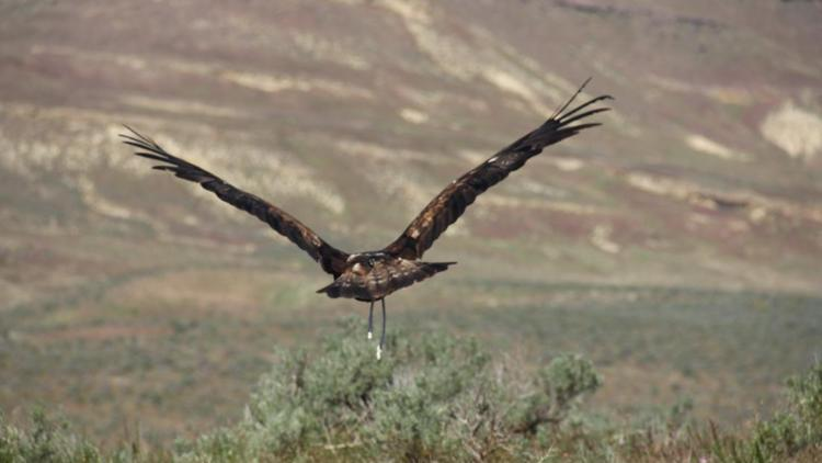 2 charged with shooting, killing golden eagle in Ada County