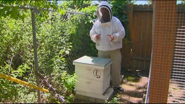 You Can Grow It: Busy bees Part 2 - backyard beekeeping