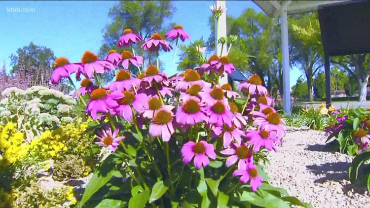 You Can Grow It: A low-water garden