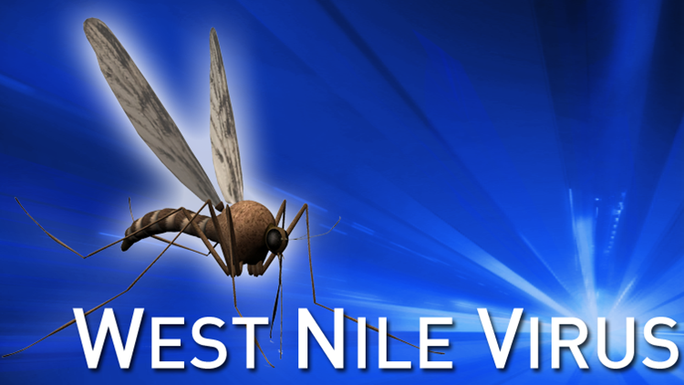 Mosquitoes Test Positive For West Nile In Wethersfield