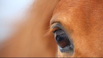 Potentially-deadly horse virus confirmed in Idaho