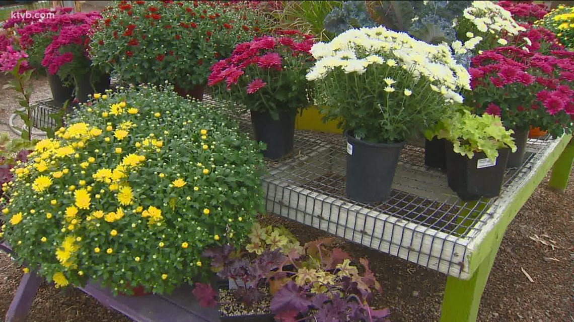You Can Grow It: Planting some fall color