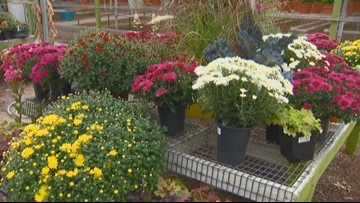 You Can Grow It: Fall flowering plants that provide color to your garden