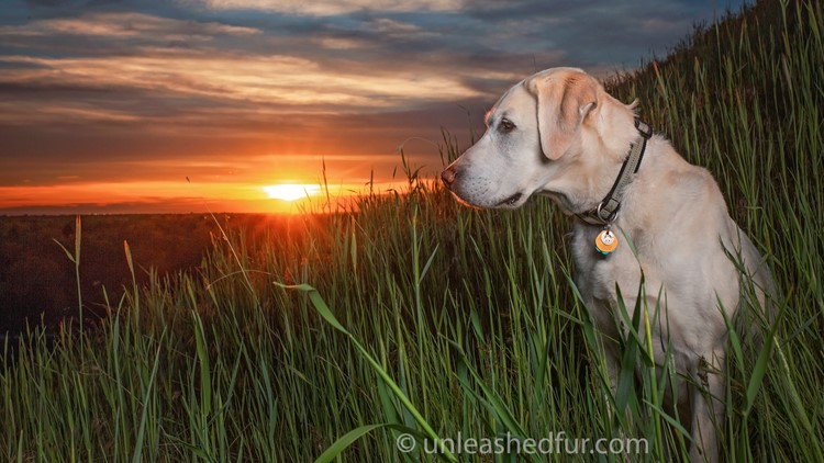 Idaho Life dog photographer Toula