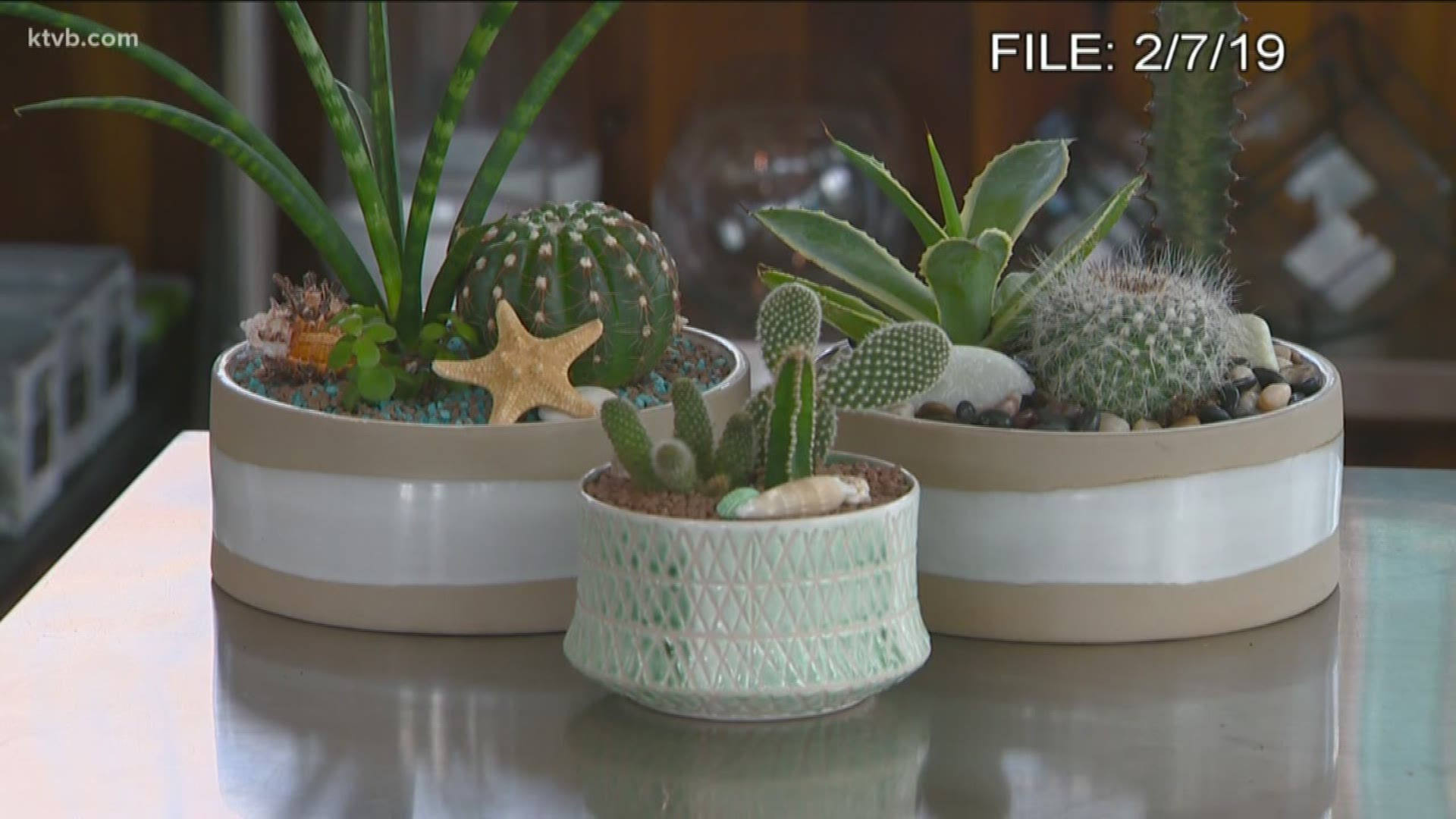 You Can Grow It Cactus And Succulent Container Gardens Ktvb Com
