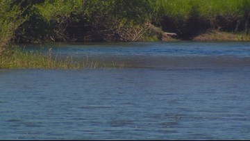 Dead dog found in Payette River