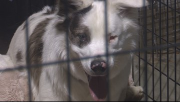 5 Meridian rescue dogs get human roommates for a day in hopes of getting adopted