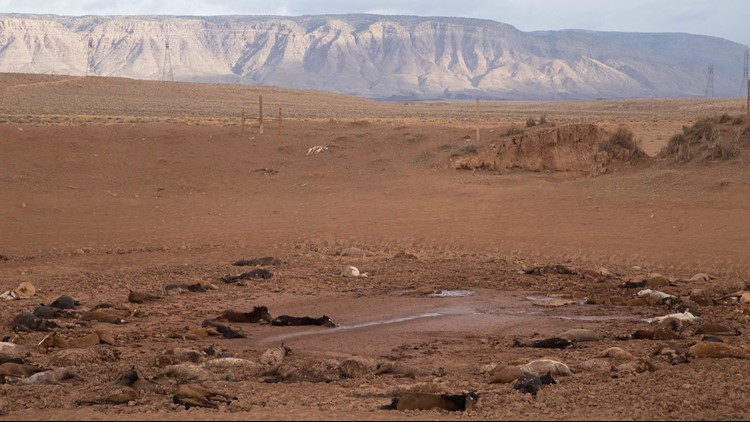 Photo shows the feral horses that were found dead at a stock pond in Gray Mountain. (Photo: Navajo Nation)