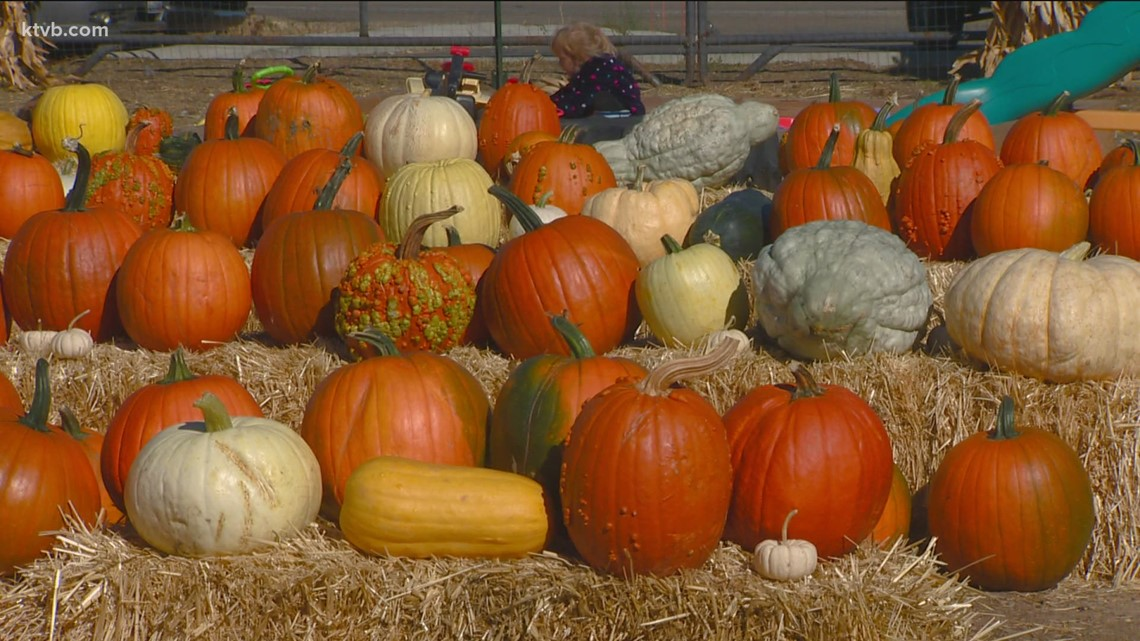 You Can Grow It: Picking the perfect pumpkin for Halloween