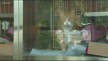 Rabid cat found in Owyhee County