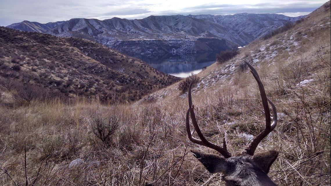 2 Idaho brothers accused of illegally killing deer in Nevada