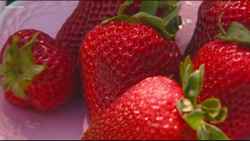 You Can Grow It: Strawberry season is here