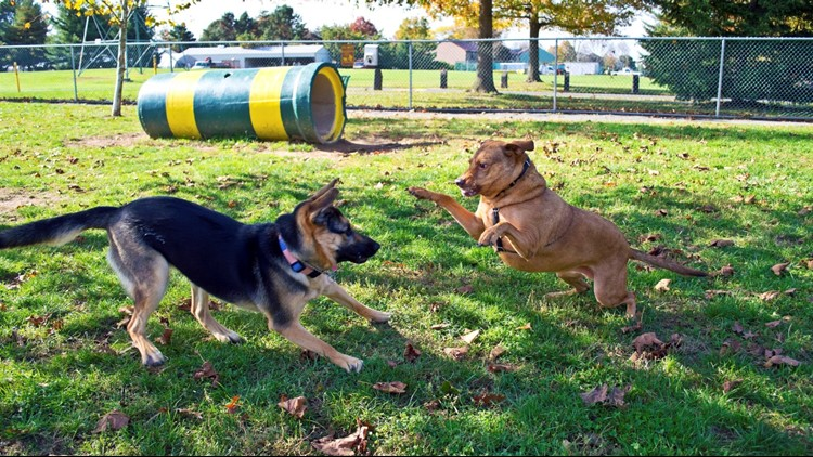 What to know about dog park rules as the City of Boise builds more off-leash dog parks