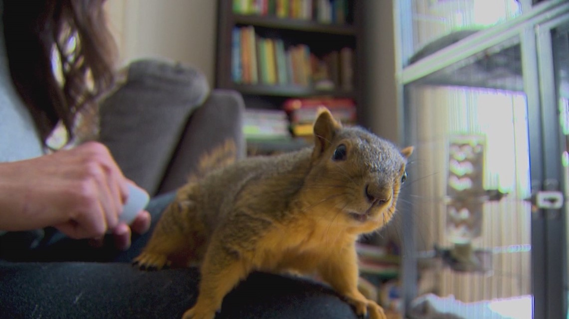 Idaho Life: North End rodent den