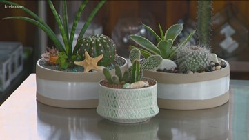 You Can Grow It: Putting together an indoor cactus and succulent garden