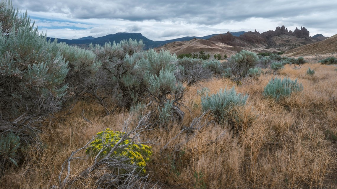 S. Idaho grazing plan that destroyed sagebrush is rejected