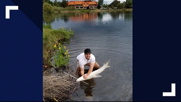 'It was insane:' Boise fisherman catches massive sturgeon in Parkcenter Pond
