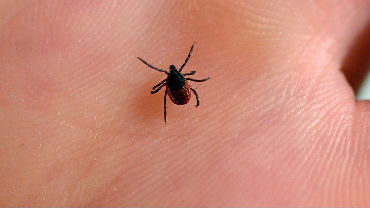 A viewer said she's seen posts on Facebook claiming tea tree oil can repel ticks. Our Verify team talked to the experts.