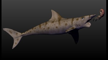 Buzzsaw Shark' fossil unearthed in eastern Idaho | ktvb com