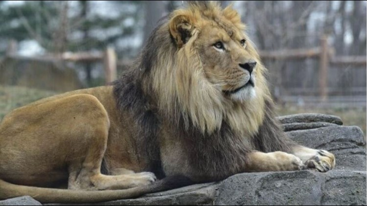 Revan has been in quarantine since his arrival in Boise from a Baltimore zoo last month, but zookeepers say he is healthy and adjusting well to his new home.