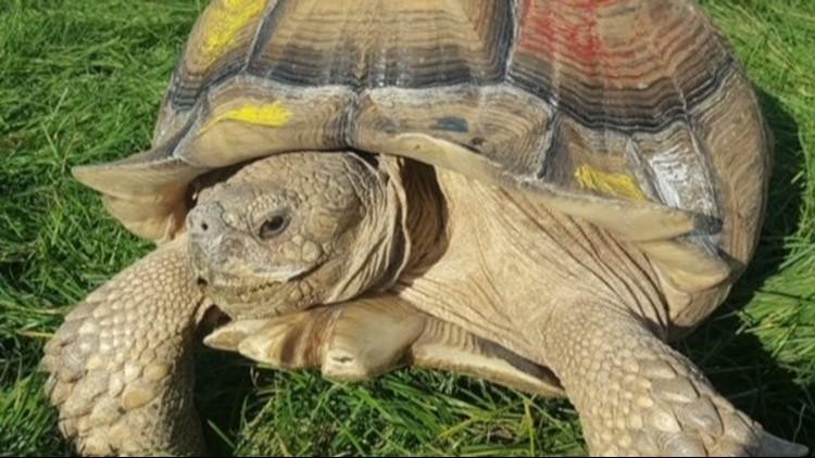 Twister Missing Tortoise CROP_1532482757150.JPG.jpg