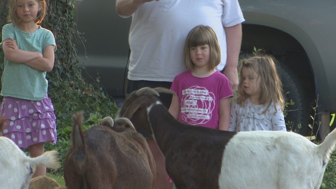 Herd of rental goats invade Boise neighborhood, baaad goat puns ensue