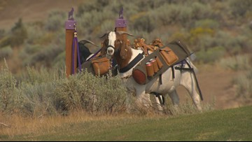 Idaho Life: Golfing with goats at eastern Oregon resort