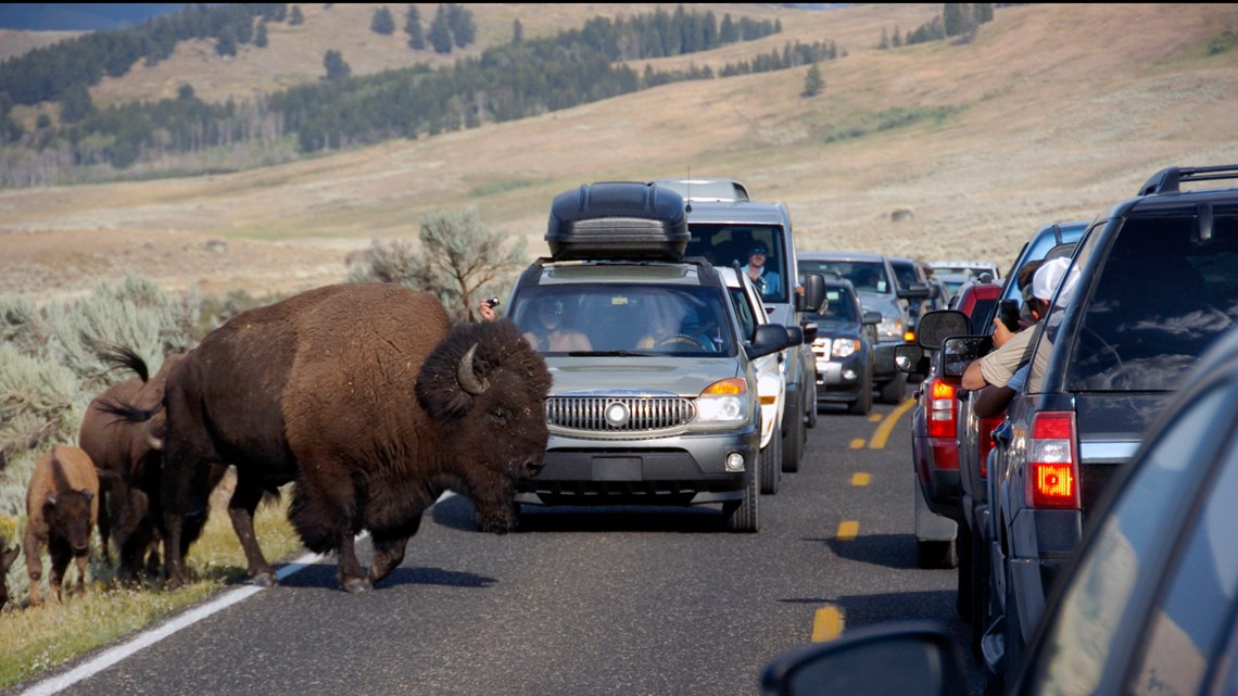 Yellowstone chief says no need for park visitors to make reservations
