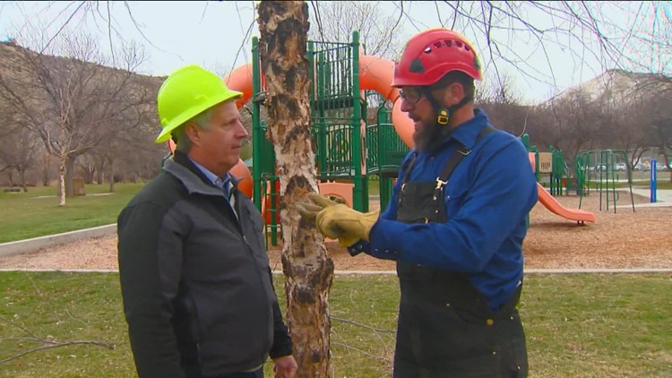 You Can Grow It: Tree pruning tips from an expert