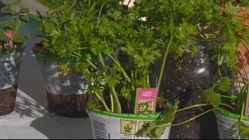 You Can Grow It: Expanding your herb garden