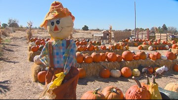 You Can Grow It: Finding the right pumpkin patch
