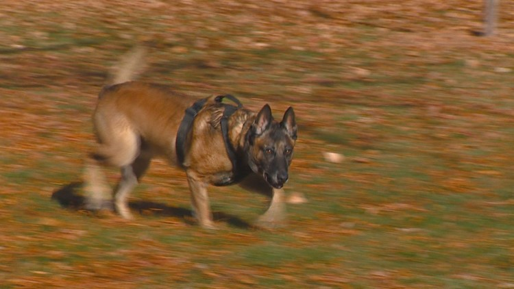 Dogs With Jobs: Boise Police K9 uses nose to detect drugs