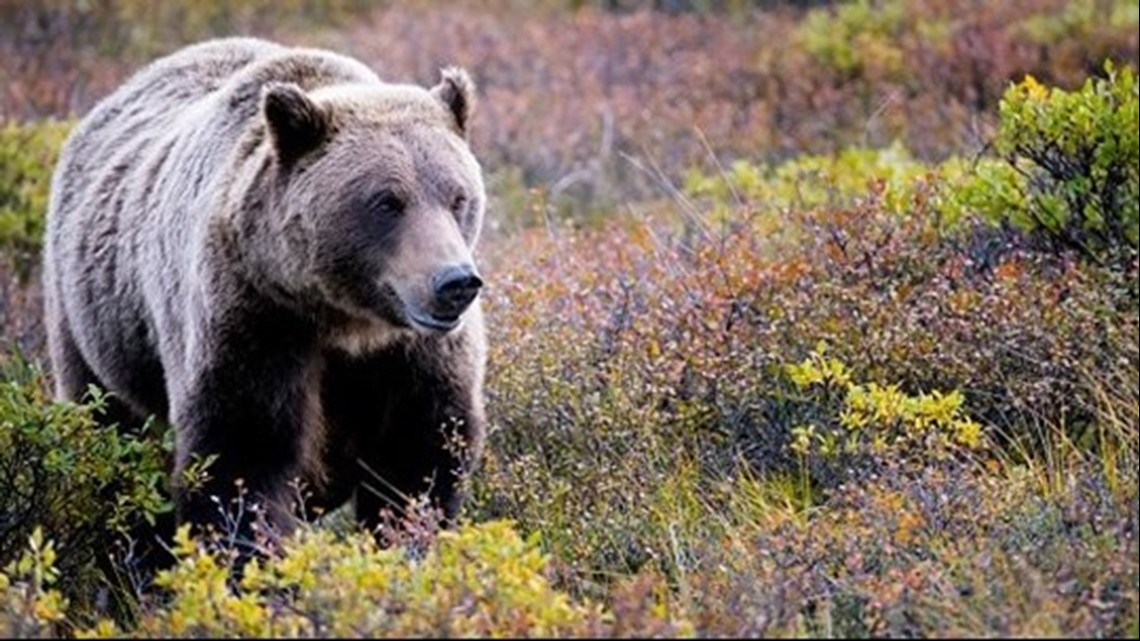73-year-old man attacked by bear while hiking in eastern Idaho