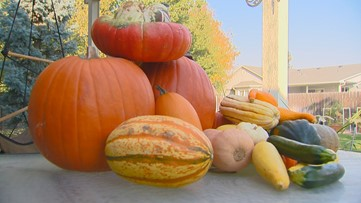 You Can Grow It: Talking about the many varieties of squash